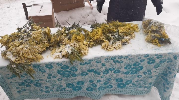 В Новосибирске начали продавать абхазские мимозы — торговцы расставили прилавки прямо в центре города