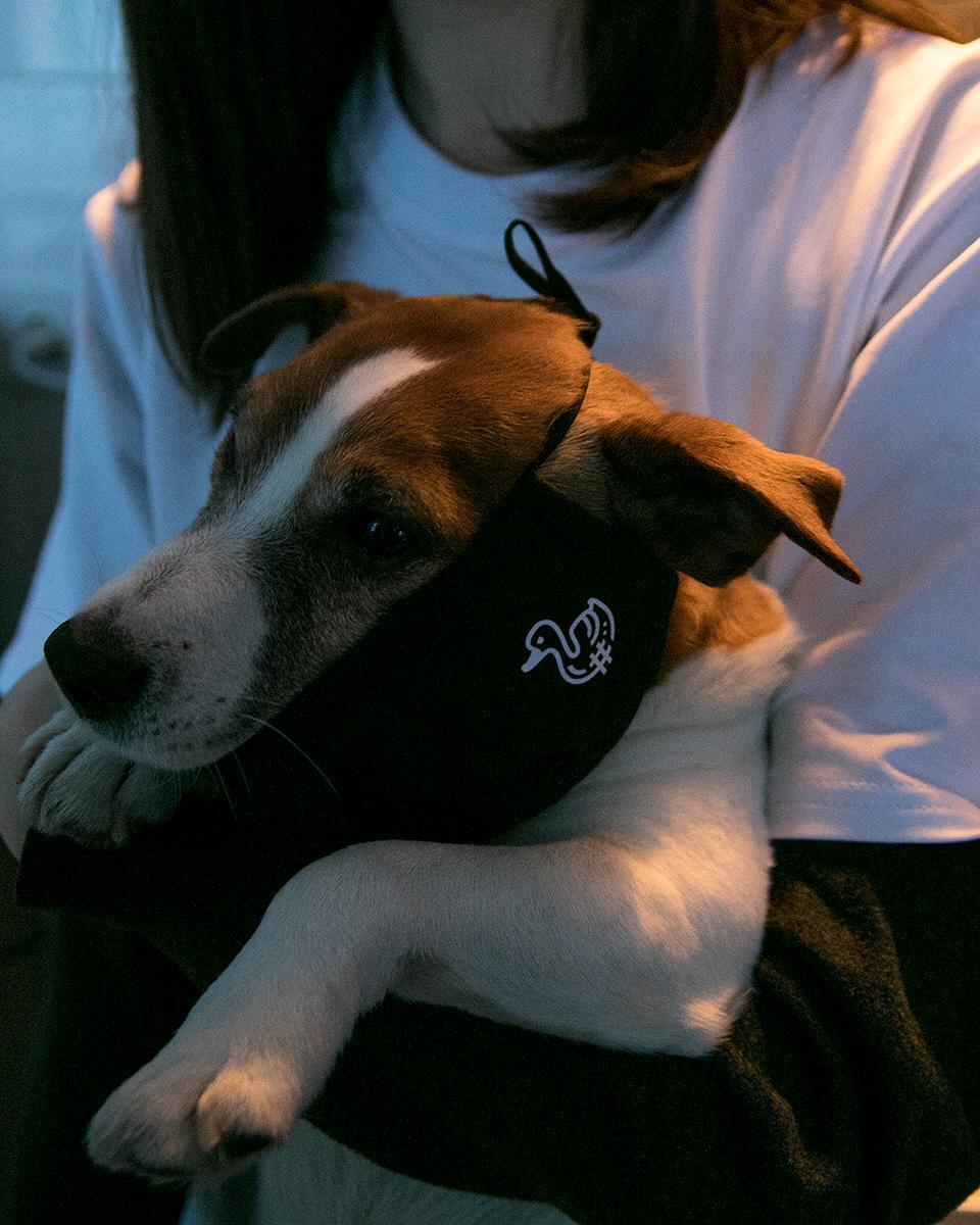"""Шерлок помогает своей хозяйке на фотосессии:""""Пытались в условиях карантина отснять футболки для новосибирского бренда, и пёсик решил принять активное участие, уж очень ему маска понравилась"""""""