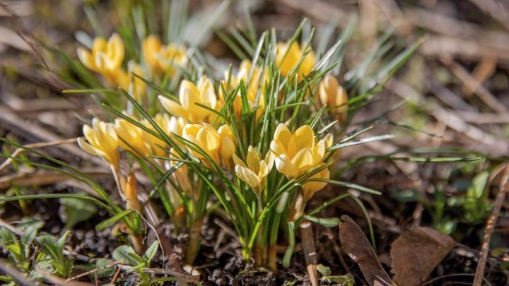 В Ярославль пришла весна: 10 нежных фотографий расцветающей природы