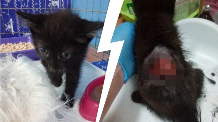 В Екатеринбурге ветеринары выхаживают месячного котенка, у которого содрана кожа