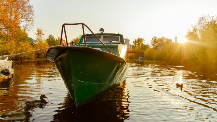 Вода, листья и коты: солнечный фоторепортаж с улиц осеннего Архангельска