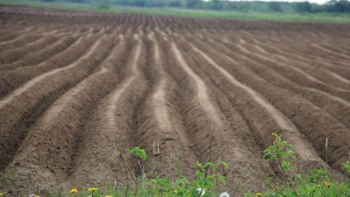В правительстве Архангельской области займутся увеличением производства сельхозпродукции