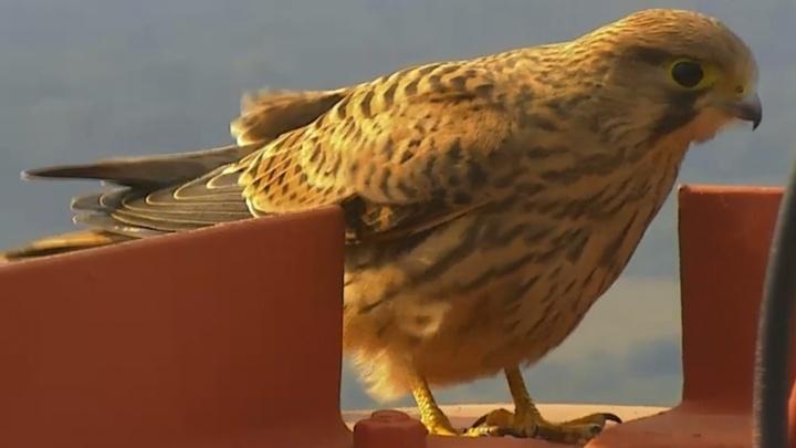 В Прикамье в кадр системы наблюдения за пожарами попал завтрак хищной птицы