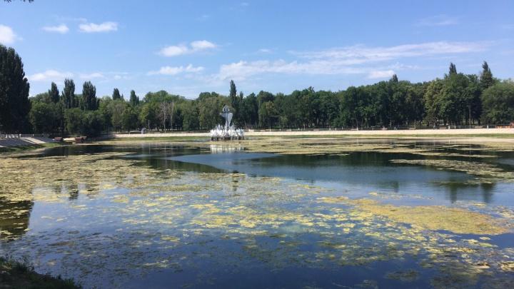 «Озеро превращается в болото»: самарцы обеспокоены судьбой водоема в парке на Металлурге
