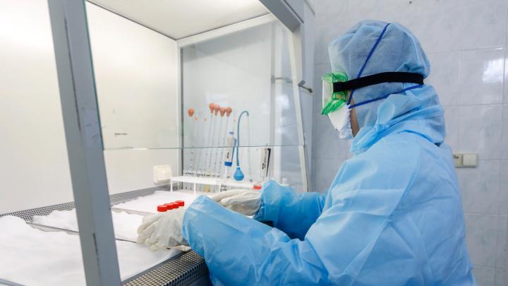 Стало известно, где в Ростове делают платные тесты на коронавирус