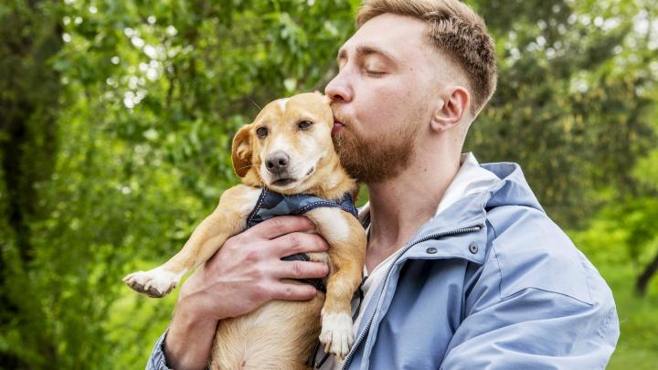 «Я так боялся, что его заберёт кто-то другой!»: ярославец приютил трёхлапого пёсика из Волгограда