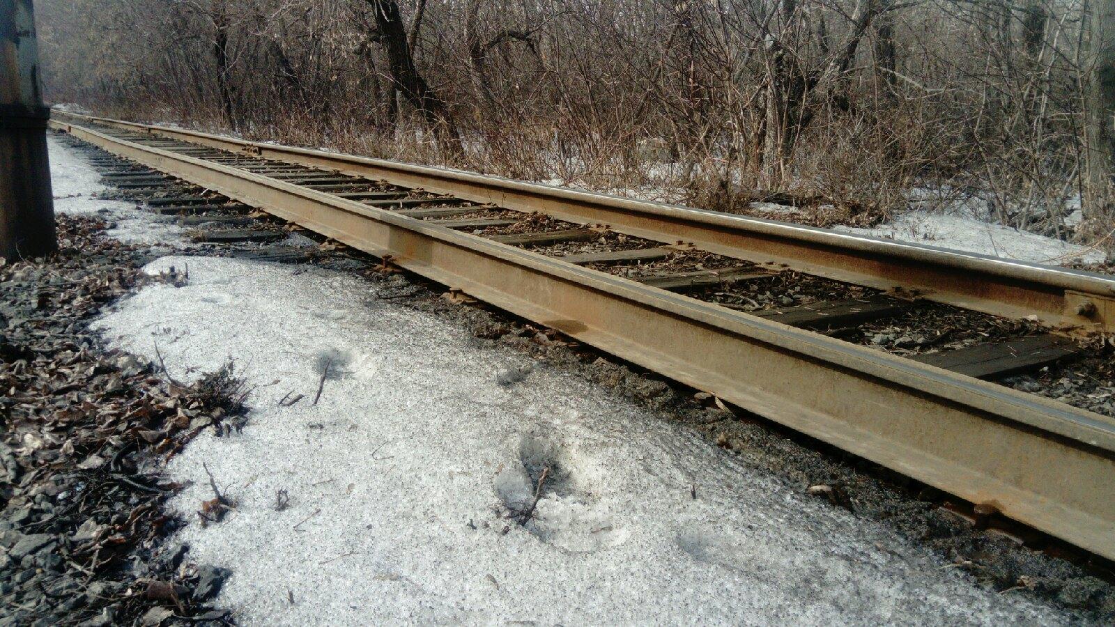 Сейчас на перегоне от остановки «Орленок» в сторону завода управления «Мечел» рельсы лежат не закрепленные, из-за этого, по словам водителя, может произойти сход вагона