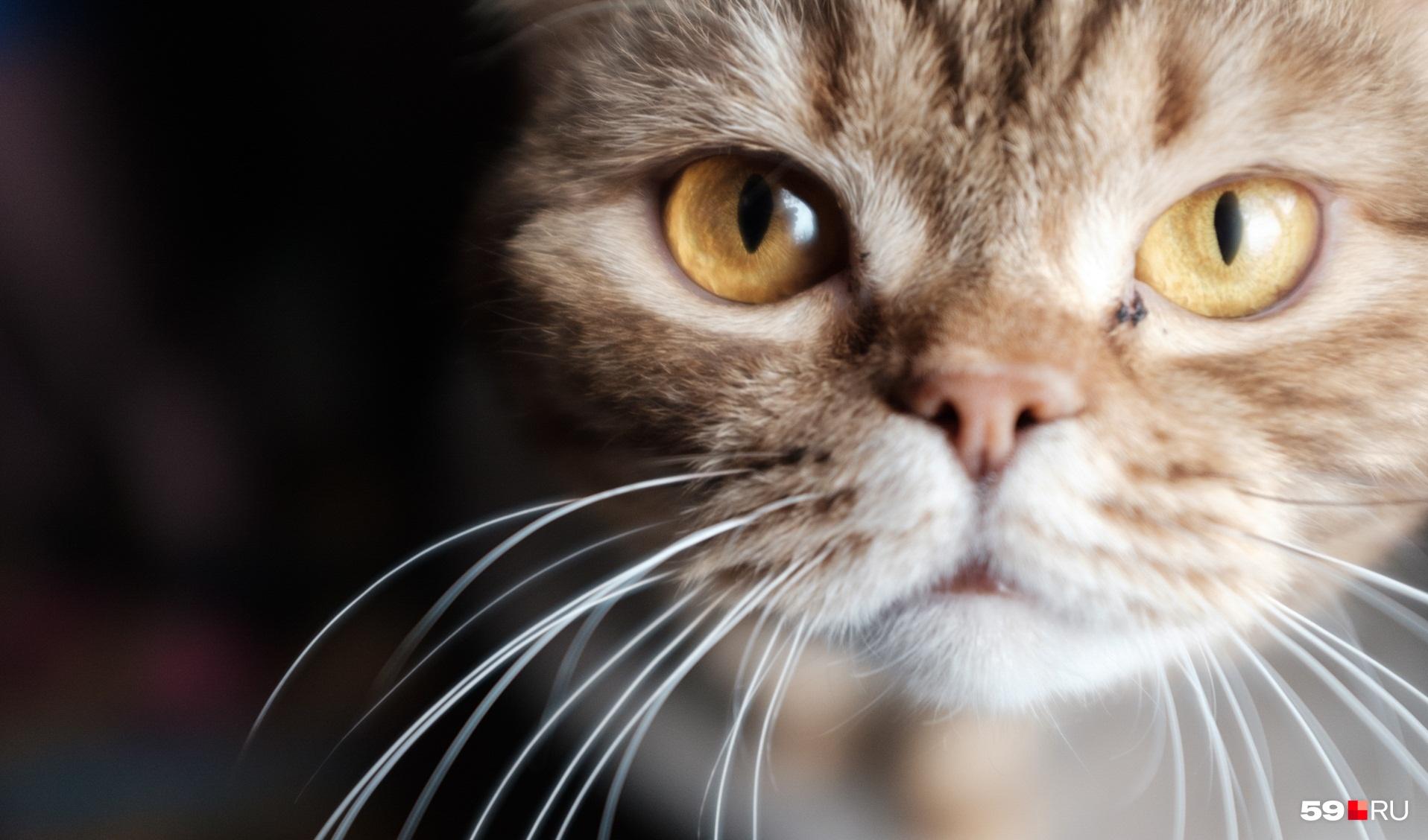 Кошачий коронавирус не зависит от породы