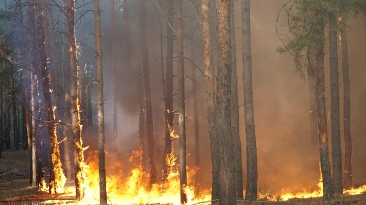 Рослесхоз назвал причину возникновения сентябрьского пожара в Ростовской области
