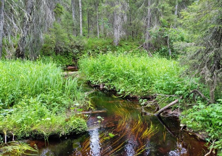 Вода в реке Мудьюге чистая, хотя и темного цвета