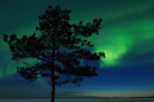 Северное сияние можно наблюдать почти в любое время, его не увидеть только в период белых ночей