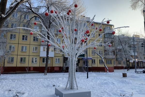 Яблоки на снегу» — так прозвали деревце горожане