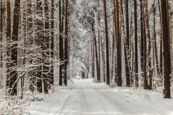 Поиски пропавшего пенсионера будут проходить в лесу