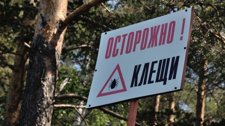 Санитарные врачи сообщили, где в Екатеринбурге больше всего клещей