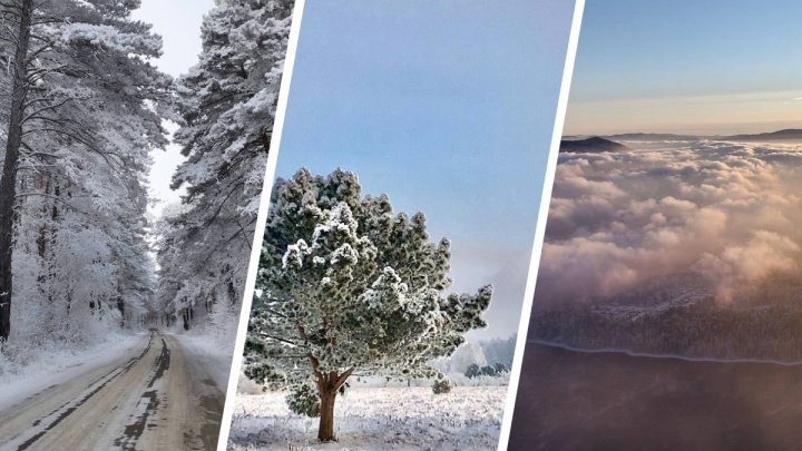 Из-за мороза и штиля деревья в Красноярске покрылись изморозью. Чарующая фотоподборка