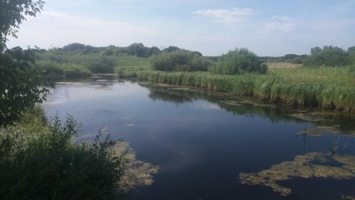 «Стало плохо, упал в воду»: под Волгоградом утонул рыбак, запутавшийся в сети