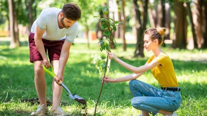 В парке «Зеленый остров» высадят 256 новых деревьев