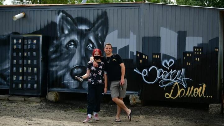 «Украсили унылые стены»: в Ярославле уличные художники расписали приют для животных