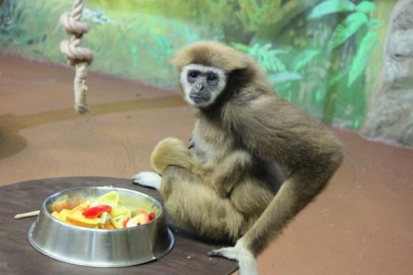 Вполне вероятно, что животным скоро будет нечего есть