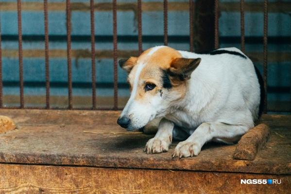 По словам очевидцев, собаку нашли еще теплой (фото из архива)