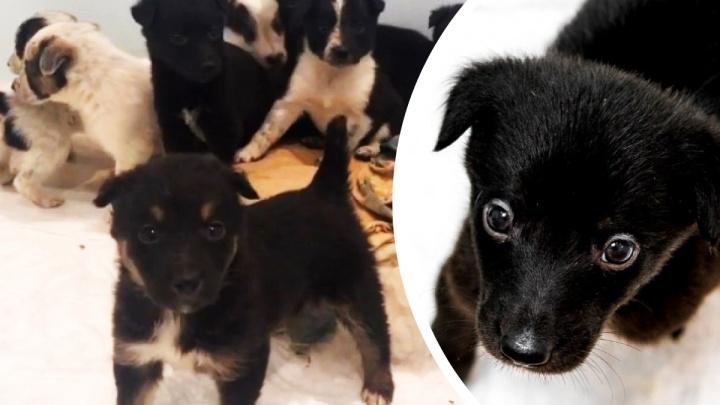 В Тюмени ветеринары спасли восемь щенков, которых хотели усыпить