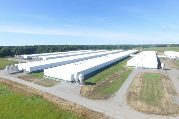 Сейчас, по данным, опубликованным на сайте компании, в год свинокомплекс производит 51,5 тысячи тонн мяса, а после введения третьей линии станет производить на 43% больше