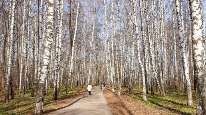 Власти Ярославской области хотят изменить границы охраняемых природных территорий