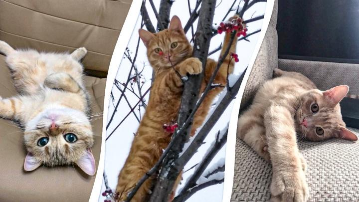 Коты-коврики, коты-поглотители ног, кошки-многодетки: разглядываем самых прекрасных животных Уфы