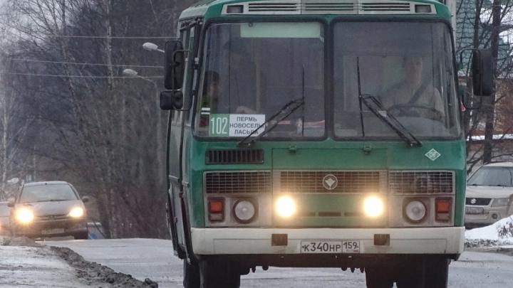 «90 автобусов марок ПАЗ, МАЗ и Lotos». В Пермь может зайти подмосковный перевозчик
