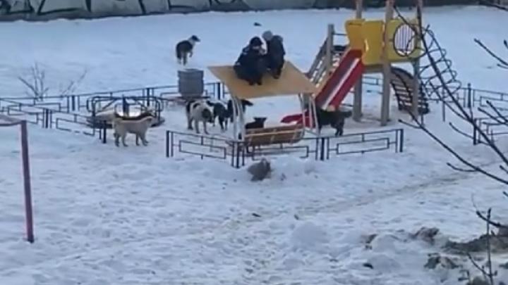 Следователи ищут детей, которые пострадали из-за нападения стаи собак
