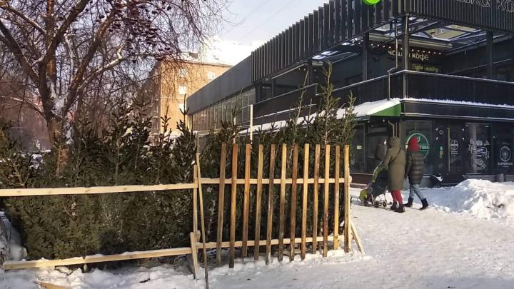 В Новосибирске начали продавать живые елки