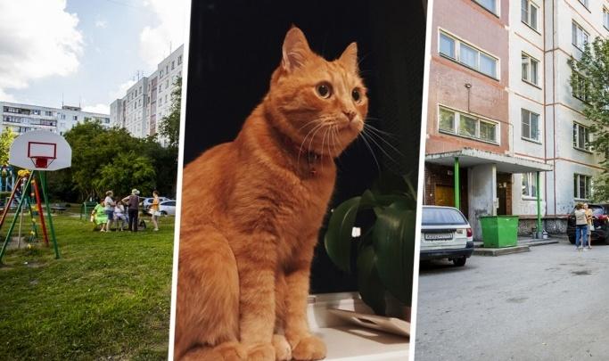 Следователи завершили расследование убийства кота Моти — подозреваемую хотят принудительно лечить