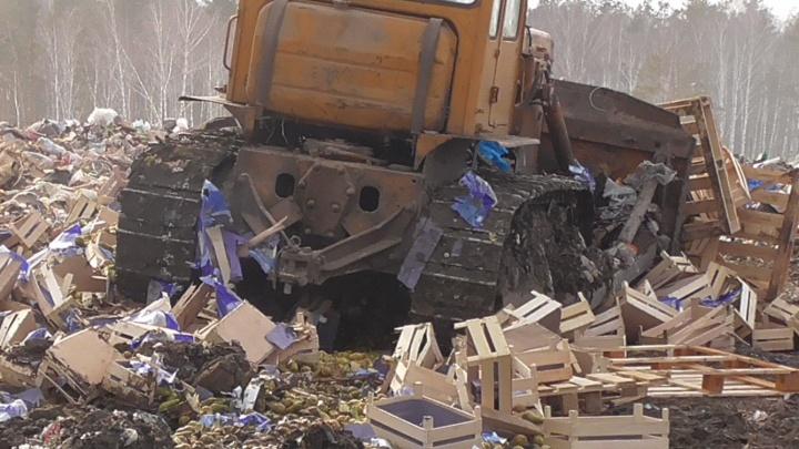 В Зауралье уничтожили почти семь тонн польских груш