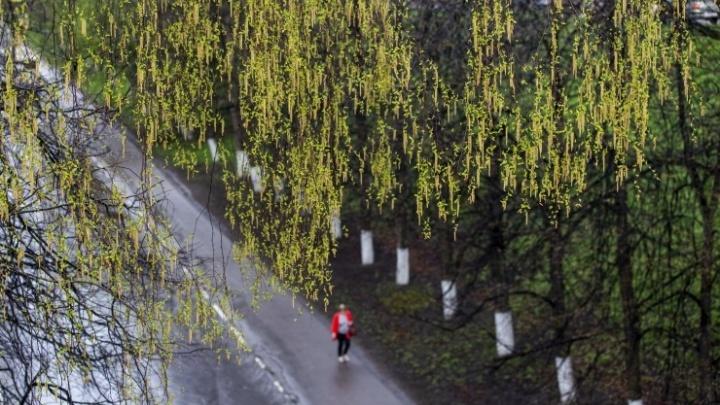 Ярославль в нежно-зелёной дымке: как выглядит город, в который всё-таки ворвалась весна