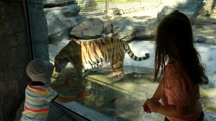 Наскучались: сегодня заработал новосибирский зоопарк — смотрим, как звери реагируют на вернувшихся людей
