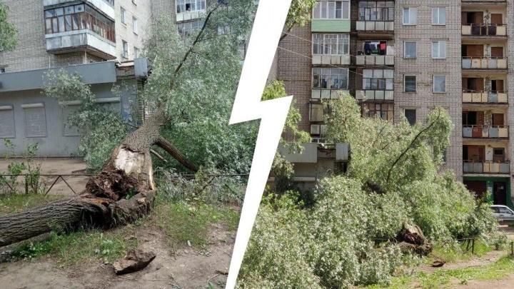 «Дерево падало десять дней»: в Ярославле на здание почты рухнула огромная ива