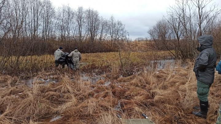 Собака нашла тело пропавшего в середине августа мужчины в Приморском районе