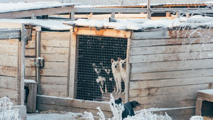Омичи пожаловались на приют для собак, который построила экс-директор «Спецавтохозяйства»