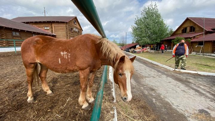 «Нельзя наказывать животных за поступки хозяев»: волгоградка о мести лошадям за владельцев «Соснового бора»