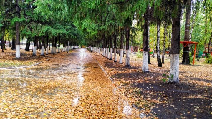 Синоптики пообещали Кургану дождливую неделю