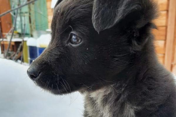Подброшенному щенку всего месяц