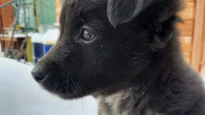 Бедный Лёлик: щенок несколько раз просился обратно к хозяйке, которая бросила его у приюта. Этот момент попал на видео