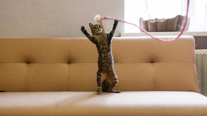 7 упражнений для вашей мимимишности: делаем зарядку с домашними животными