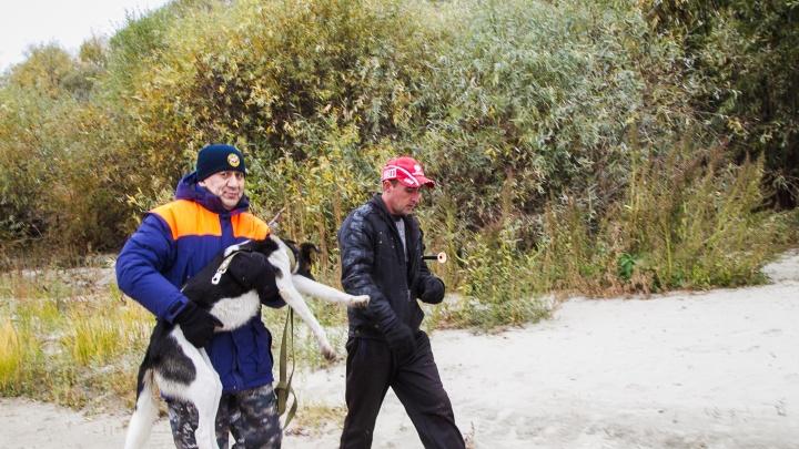 Омские спасатели вывезли с острова на Иртыше ещё одну собаку