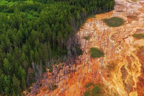 С высоты птичьего полета видно, как шахтные воды сжигают лес