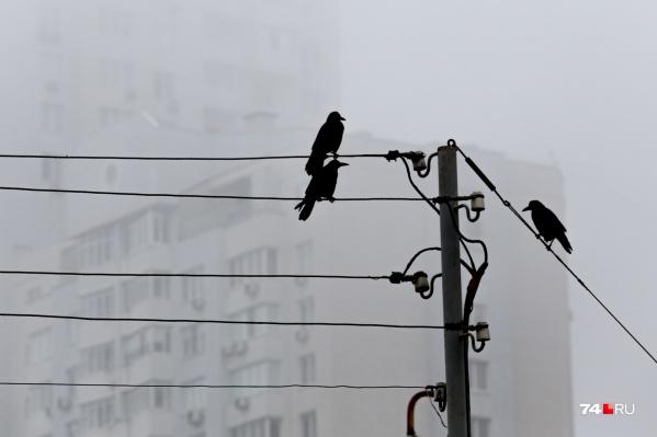Махинации с деньгами, которые потребители платили за электричество, вылились в массовые задержания экс-руководителей энергокомпаний