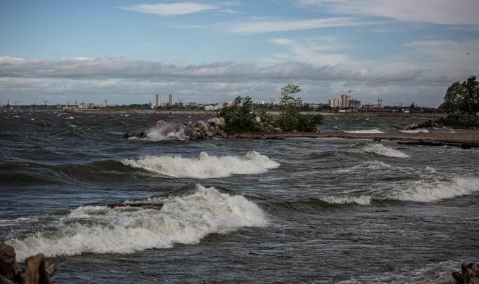 Порывы сбивают жару: синоптики рассказали, когда в Новосибирске успокоится ветер