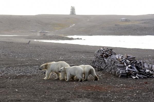 Мимо места пребывания сотрудников парка может проходить 45–50 медведей с июня по октябрь