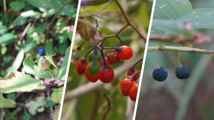 Нарушение координации, судороги и остановка сердца: смотрим на ягоды, которые могут вызвать отравление