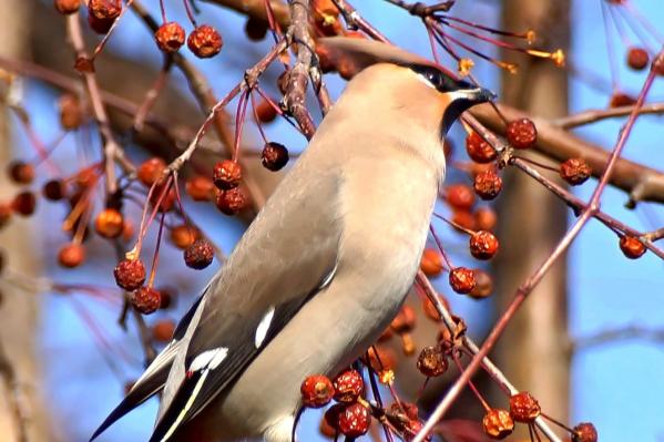 Красивых птичек первым заметил фотограф